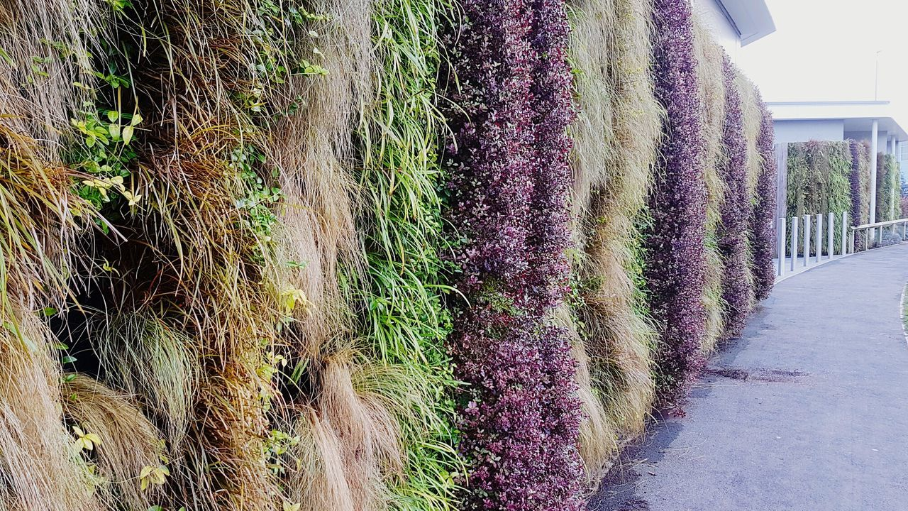 Vertical gardening Green Color No People Outdoors Garden Gardening Greening Up! Greening Nandos NandosUK Vertical Gardens Vertical Garden Green Wall Green Walls Green Wall Decoration Modern Modern Garden Urban Urban Gardening