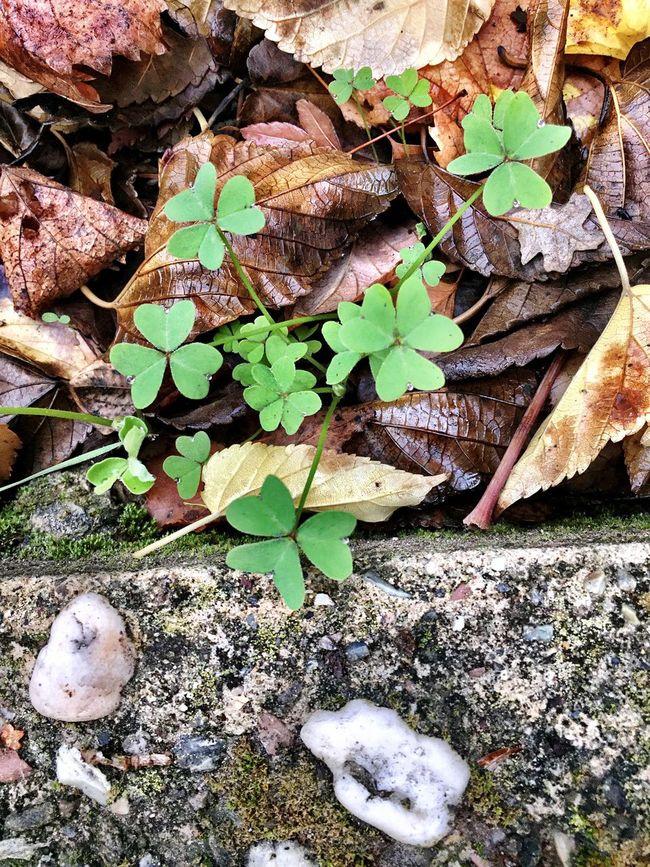 """Cornucopia"" Dried Autumn leaves, green clover, aggregate, and moss make for a photo cornucopia of color, texture and pattern. Autumn Leaves Clover Aggregate Exposed Aggregate Slab Moss Cornucopia Texture Textures And Surfaces Pattern Colors"
