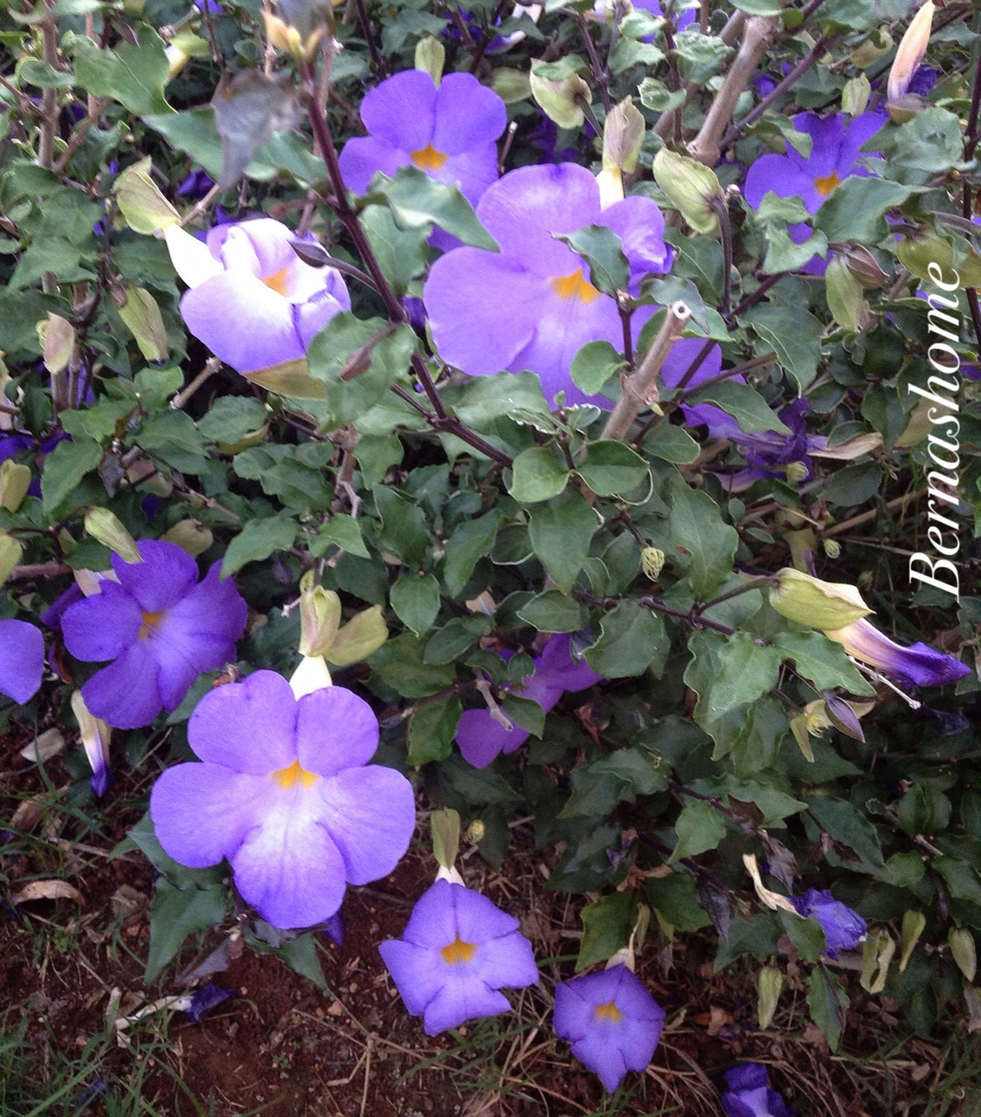 flower, purple, freshness, fragility, petal, growth, high angle view, beauty in nature, leaf, flower head, blooming, plant, nature, in bloom, field, close-up, botany, outdoors, day, no people