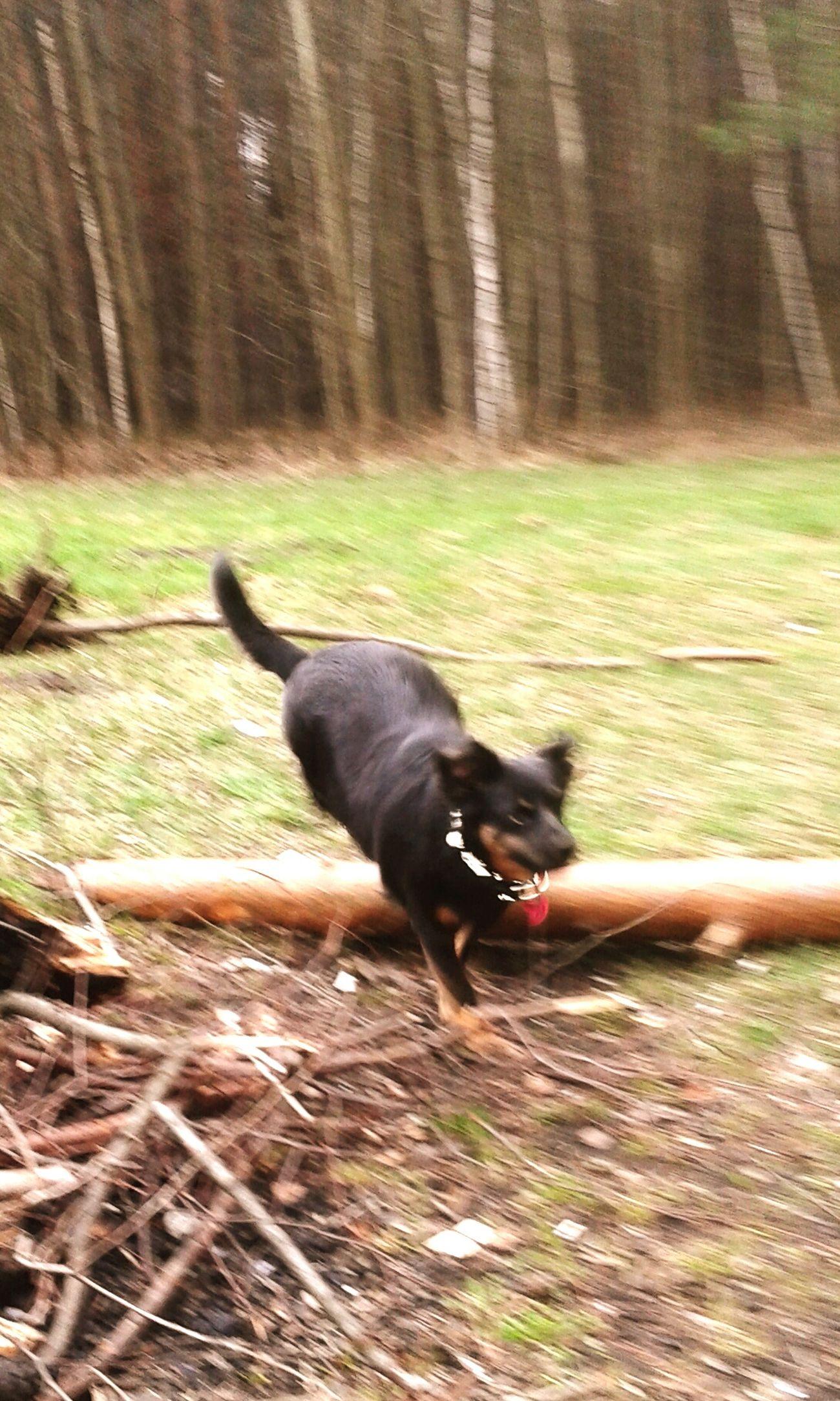 Hello World Besties dog Mi Crazydayz