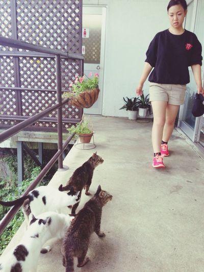 Cats Nokogiriyama