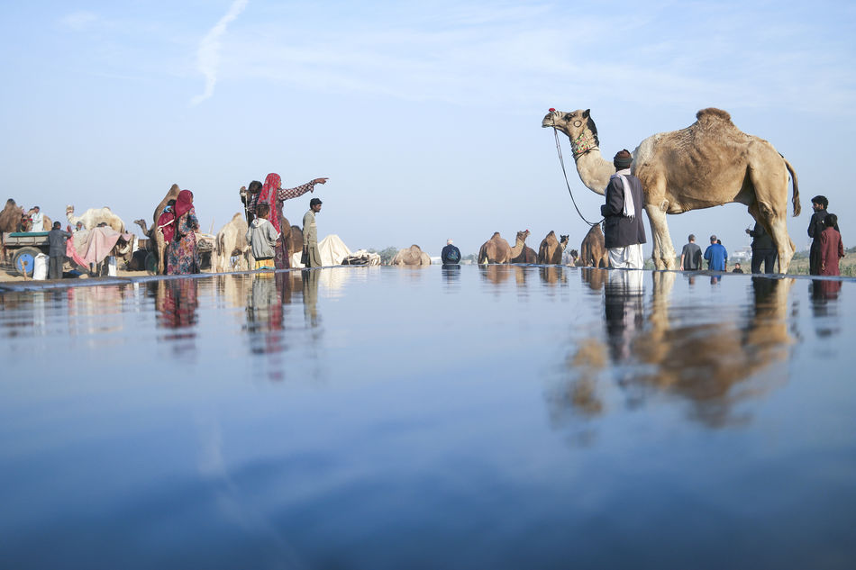Beautiful stock photos of indien, Animal Themes, Artificial, Arts Culture And Entertainment, Camel