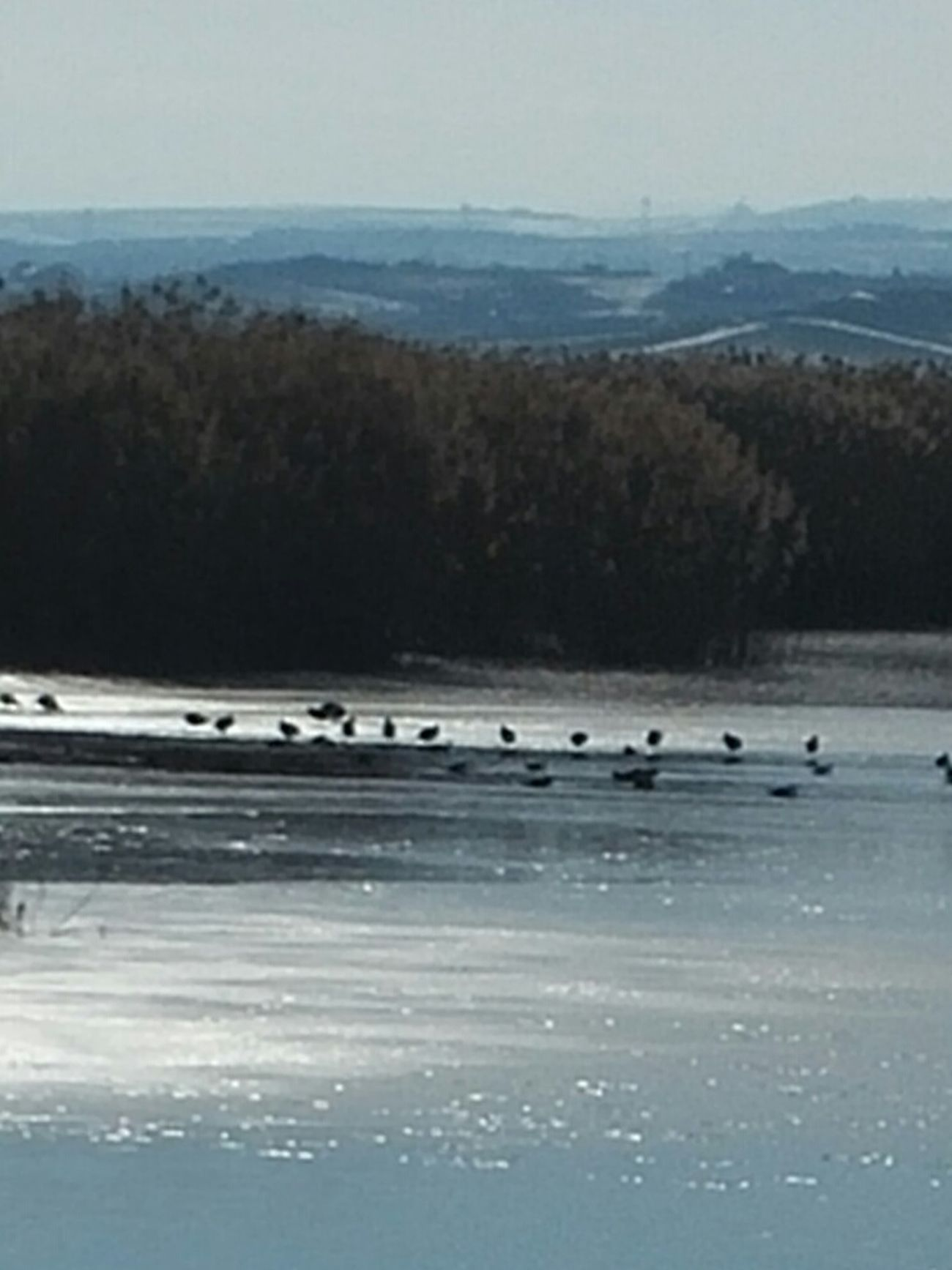 Winter Frizen Lake Birds Mogan Lake
