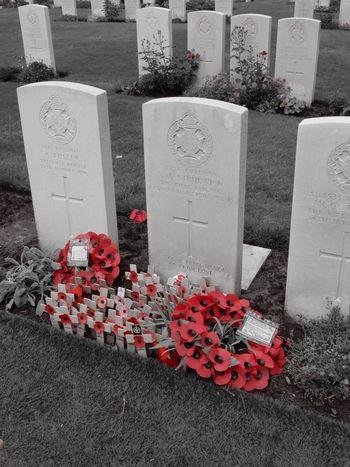 Poppy Poppy Flowers Remember Rememberance Remembrance Red Flower Stone Headstone Headstones Headstones In A Row