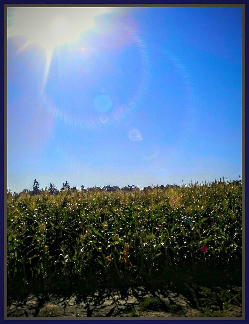 Check This Out Oregons Beauty Oregon Land Otegonlandia Colour Of Life Enjoying Life Home Sweet Home Home Is Where The Art Is Thank You Mother Nature Nature Made Nature Exists! Fieldscape Be Creative! Vinyards Color Palette Color Photography Whats On The Roll Thr Week On Eyeem The Great Outdoors - 2016 EyeEm Awards The Week Of Eyeem Winolife Wineyard