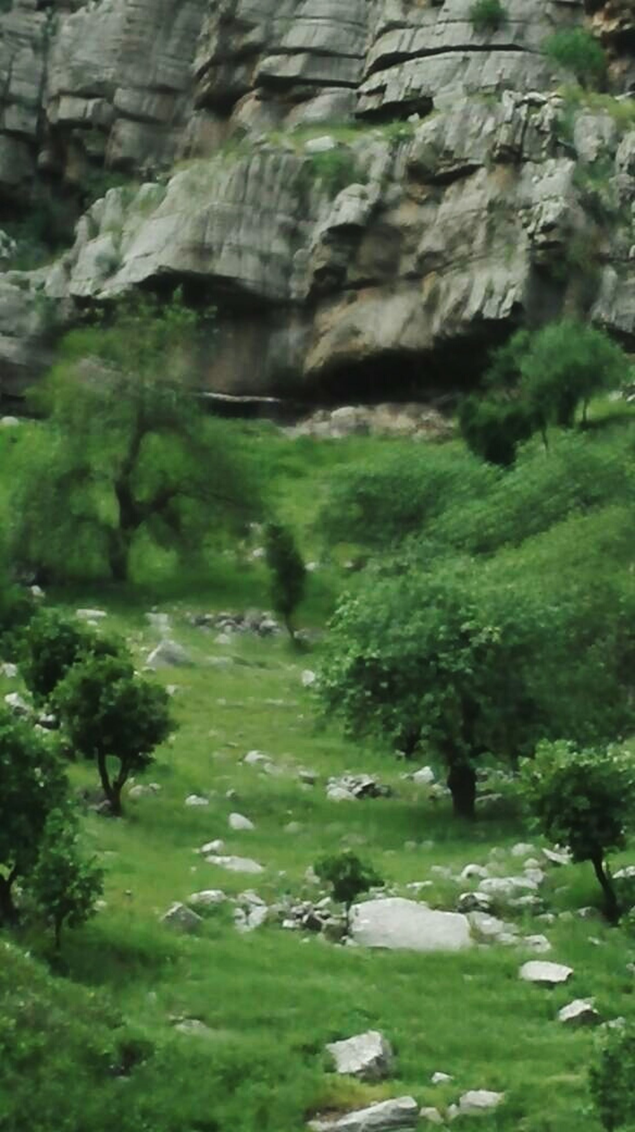 rock - object, nature, green color, no people, tranquility, beauty in nature, day, outdoors, scenics, water, tree