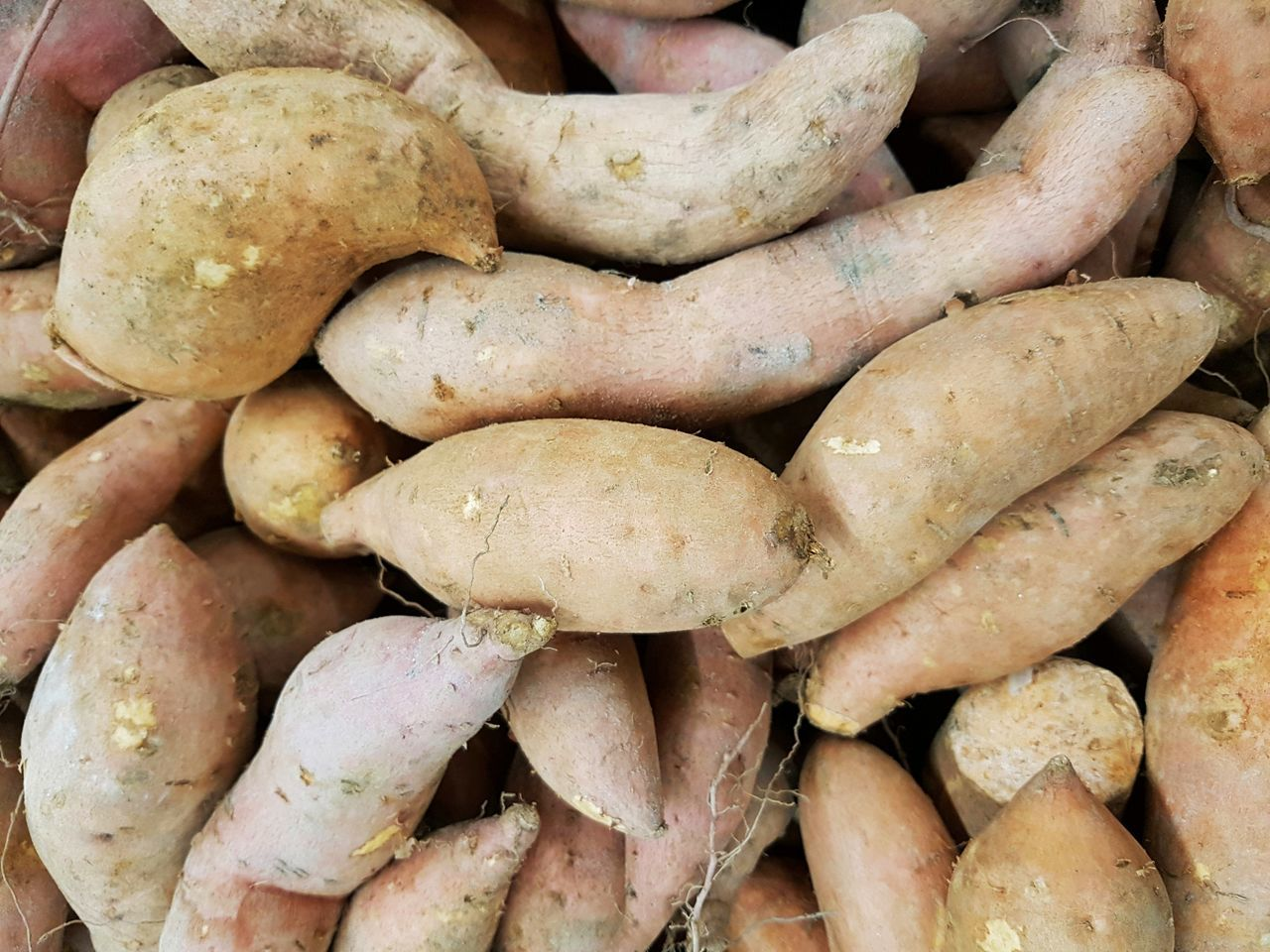 Sweetpotatoes Still Life Close-up Healthy Eating Vegetable Freshness Food Full Frame Plants Agricultural Agriculture Agronomy