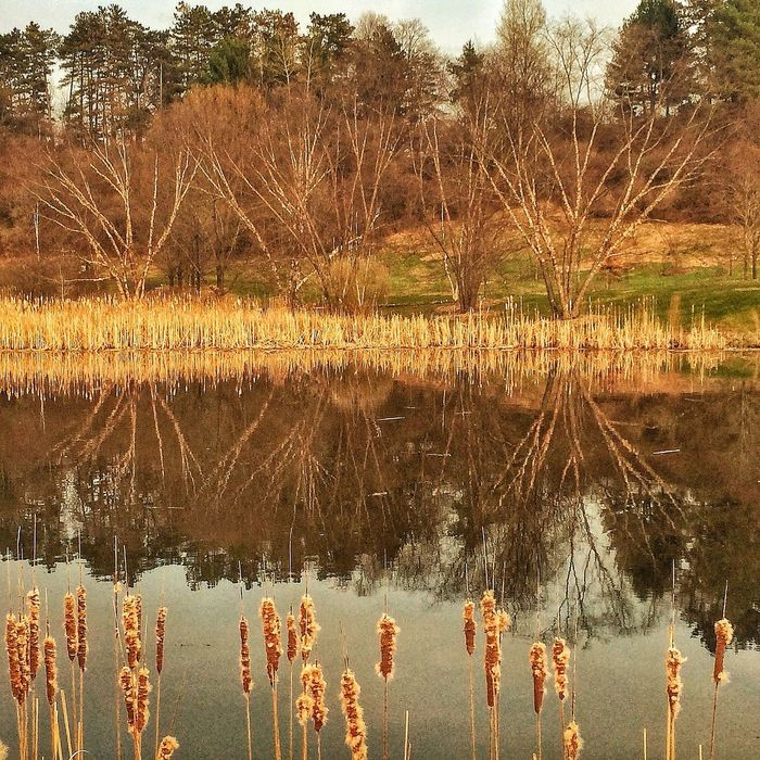 IPSTrees Cornell University Nature Reflection #iphone #pond #iphonephotography
