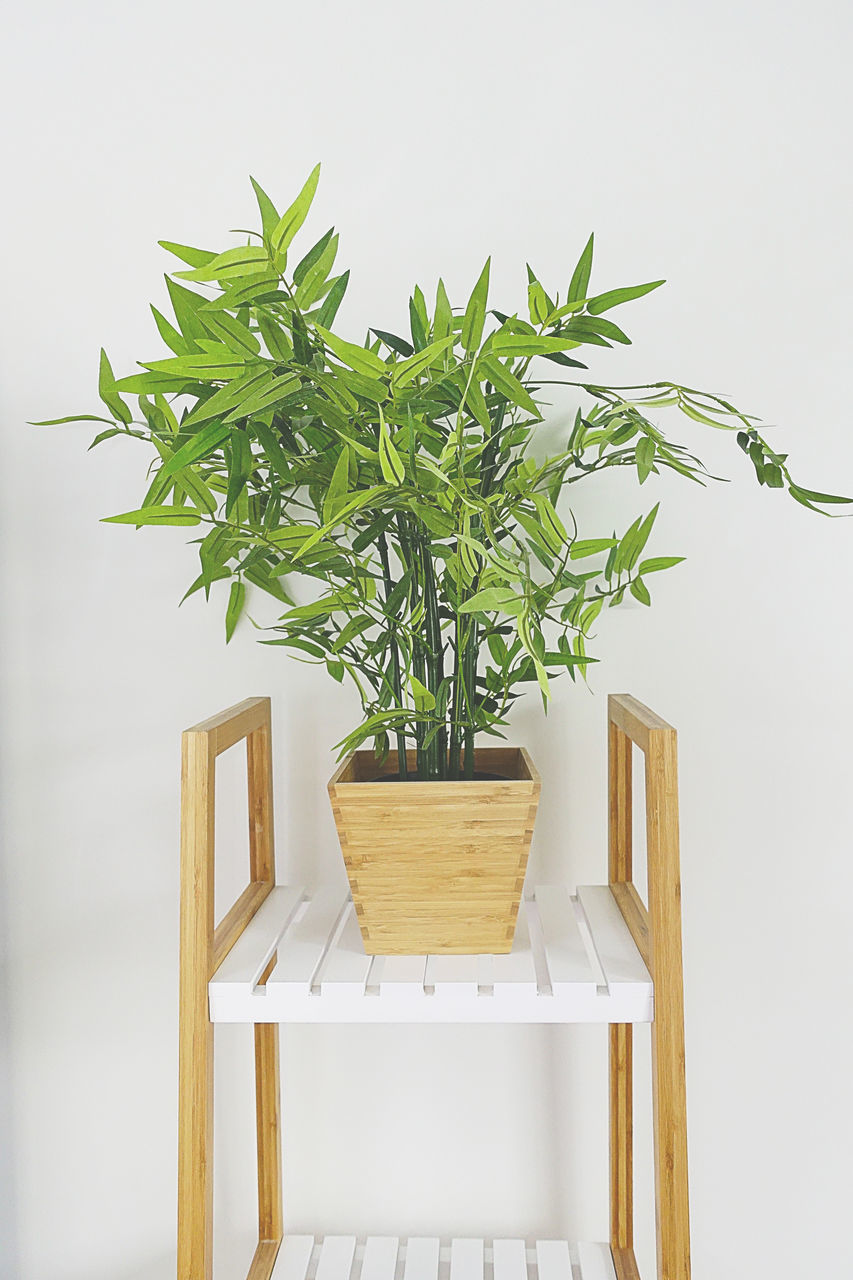 growth, plant, potted plant, leaf, no people, nature, green color, table, indoors, tree, freshness, close-up, day