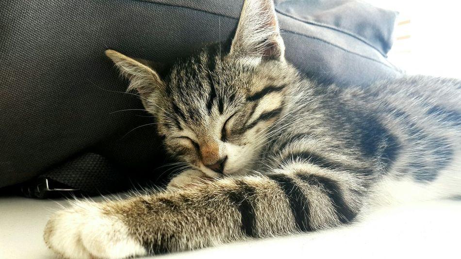 MSGSU Mimarsinanuniversity Cats