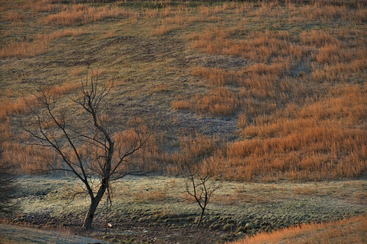 Abstract Field Grass Grass, Reeds, Reed, Golden, Marsh, Marshy, Marshland, River, Water, Light, Sage Sage Brush Sagebrush