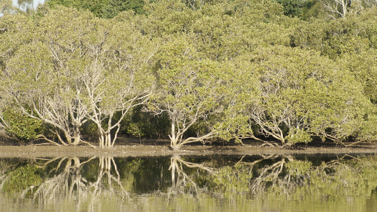 Nature Water No People Lake Outdoors Tree Beauty In Nature Salt Water Mangroves First Eyeem Photo