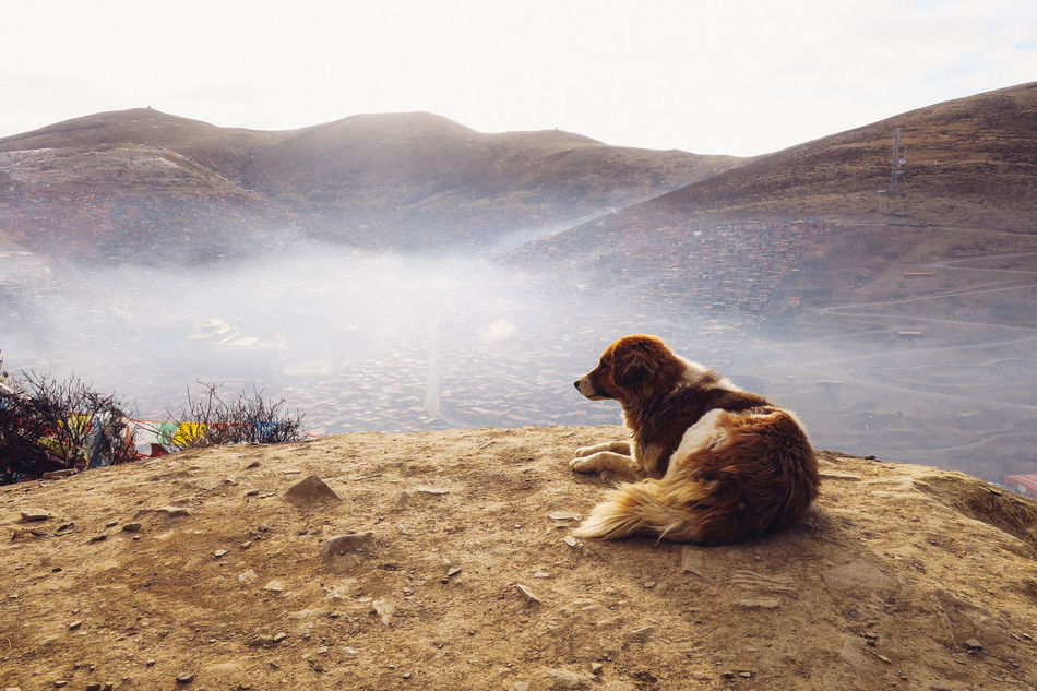 Animal Themes Beauty In Nature China Dog Landscape Long Goodbye Mammal Morning Mountain Mountain Range Nature One Animal Pets Scenics Sertar County Sichuan Sitting Sky Storytelling Travel Destinations