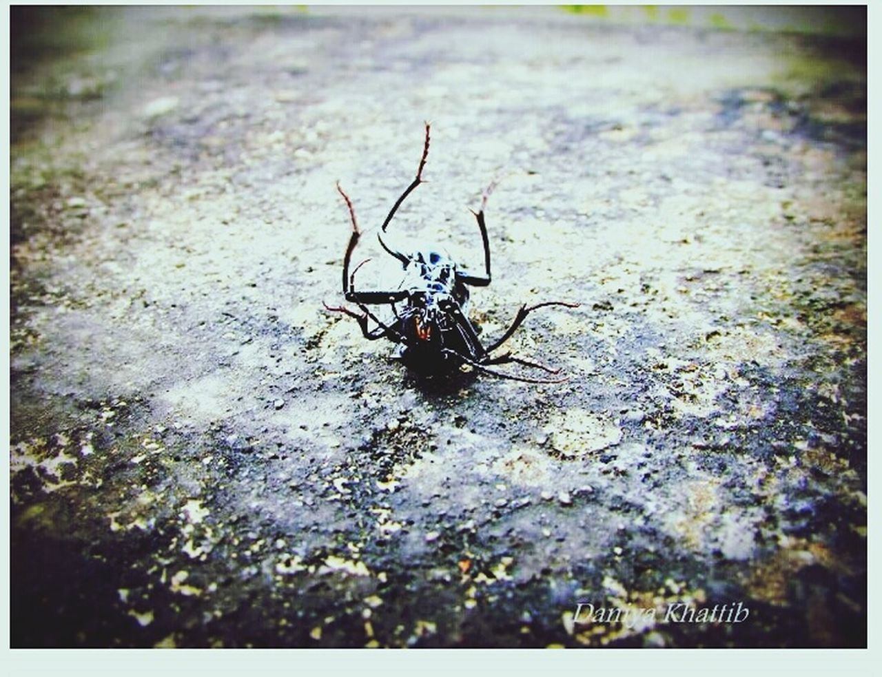 animal themes, one animal, insect, animals in the wild, wildlife, day, no people, outdoors, close-up, full length, nature