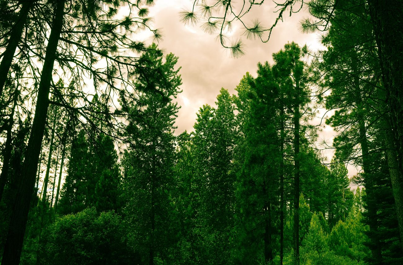 The Forest Green. #lightroom