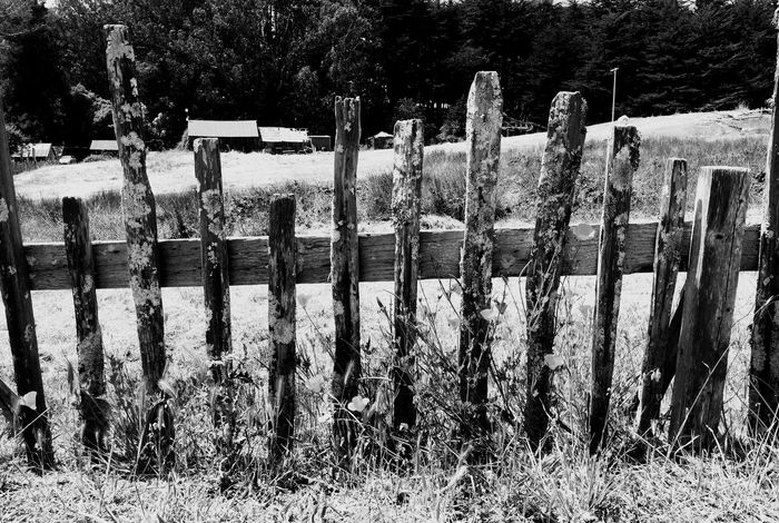 Fort Ross Wood Fence California Poppies Blackandwhite