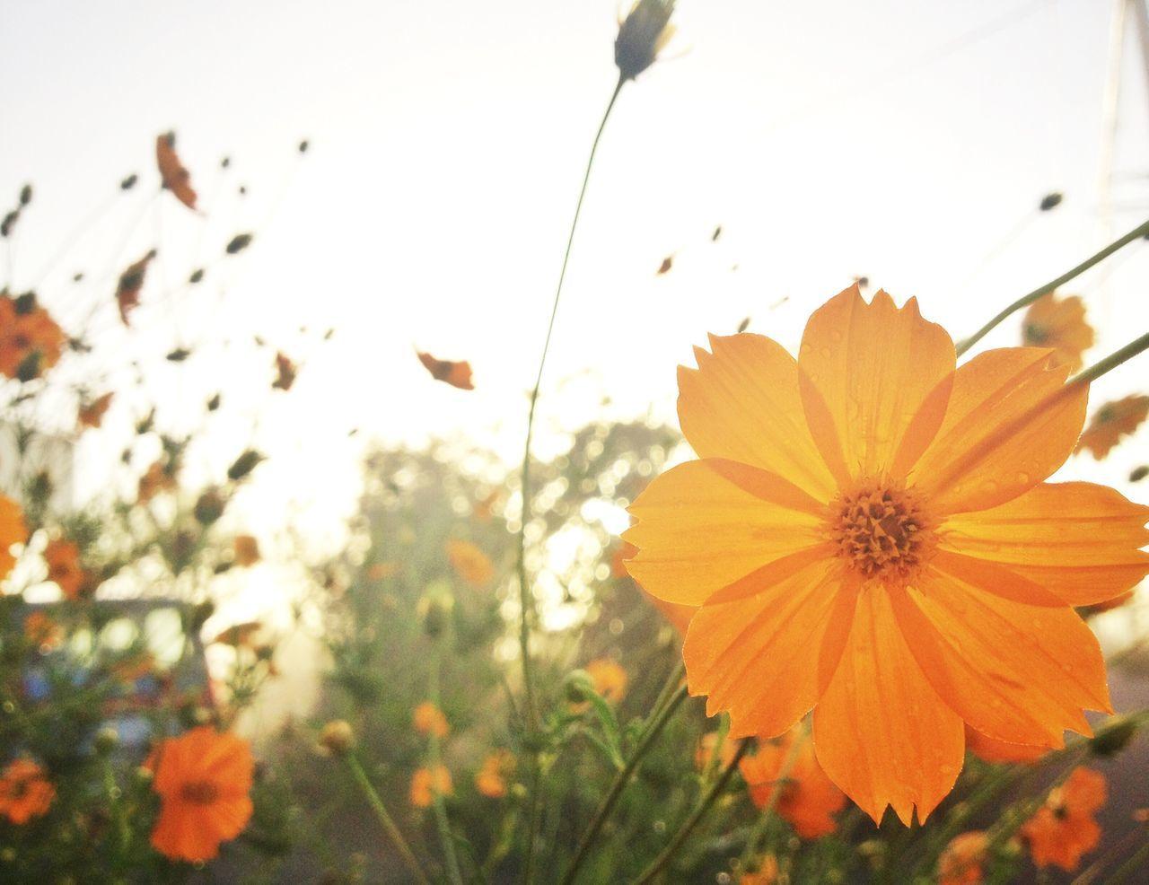 Beautiful stock photos of model, Beautiful, Beauty In Nature, Blooming, Bright