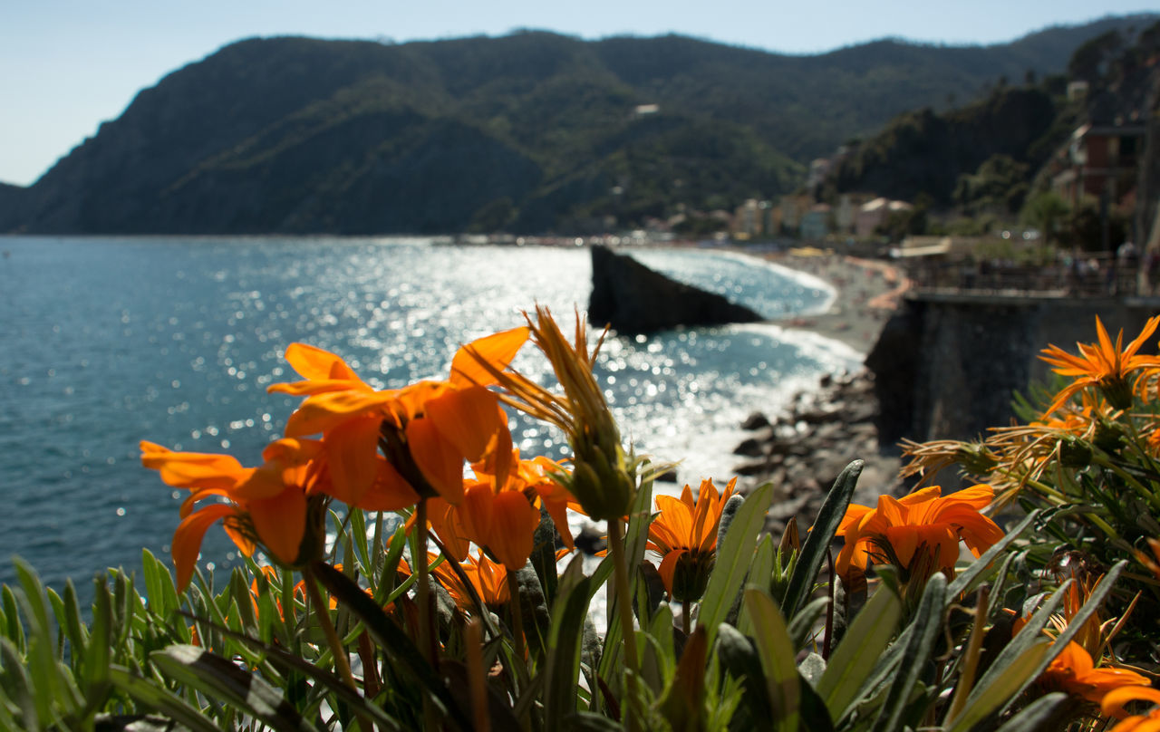 Beauty Flower Flower Head Focus On Foreground Mountain Nature No People Orange Color Orange Flowers Petal Plant Seaviews Sun & Sea  Sun In The Water Water A Bird's Eye View