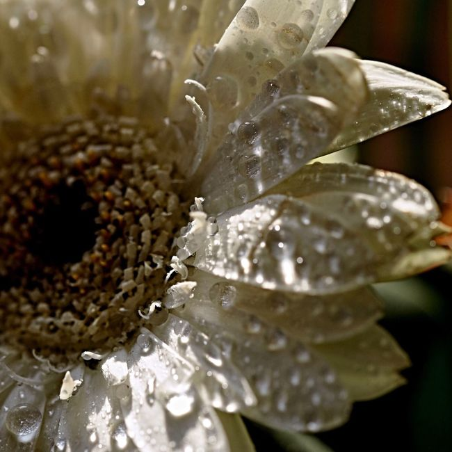 Trying out my new macro lens 📷 Macro Macro_collection Macro_flower Macro Photography