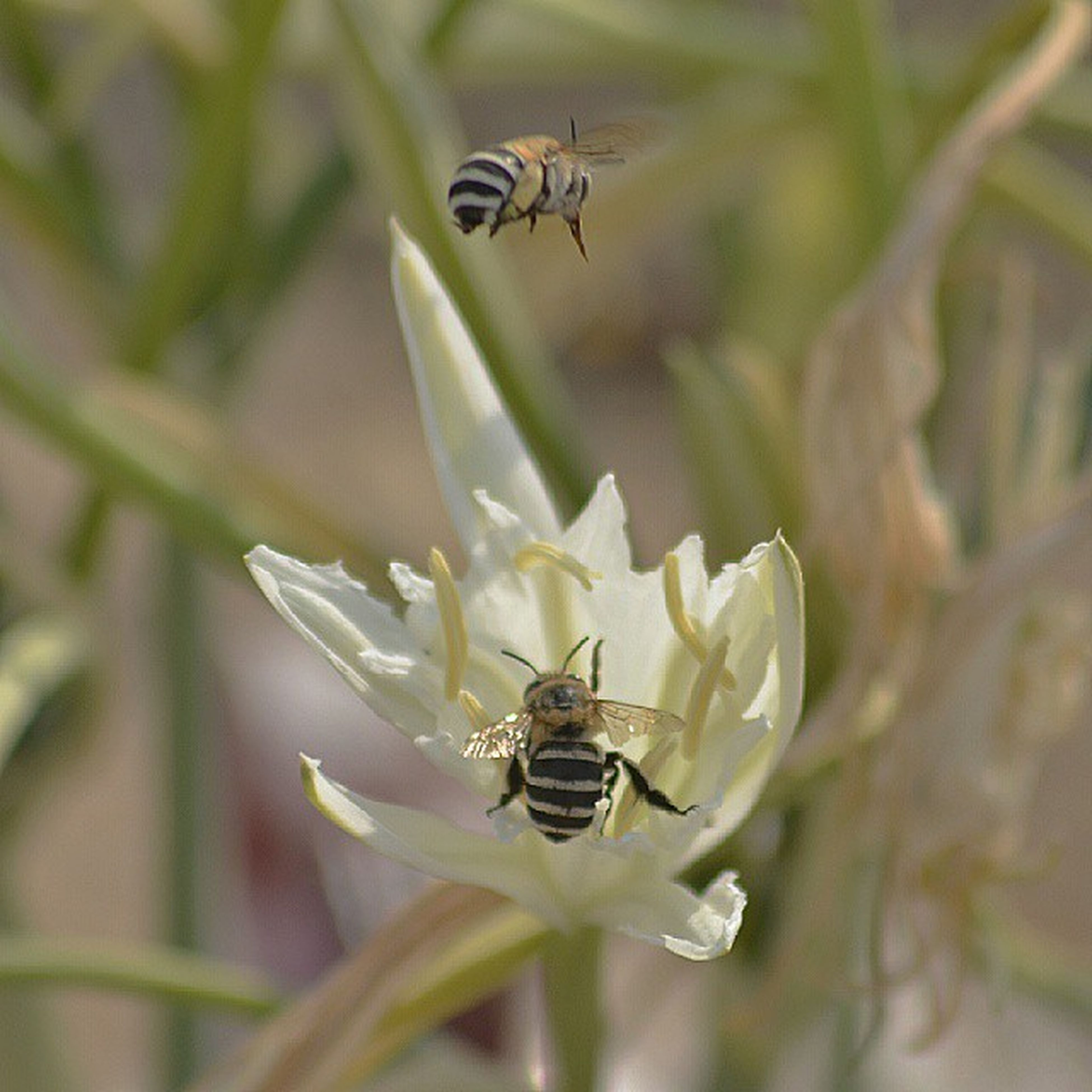 animal themes, animals in the wild, insect, wildlife, one animal, flower, flying, close-up, focus on foreground, nature, pollination, bee, two animals, selective focus, plant, beauty in nature, symbiotic relationship, zoology, growth, outdoors