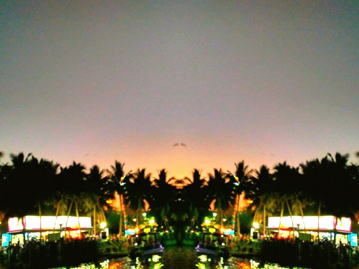 Palm Tree Travel Destinations Tree Sunset Illuminated Night Outdoors Nature Sky No People Dusk In The City Dusk Colours Duskcolors