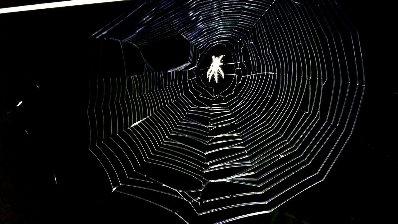 A spider web in locality City Spider Web No People Spinning Spider Concentric Close-up Outdoors Web Nightphotography Spiderworld