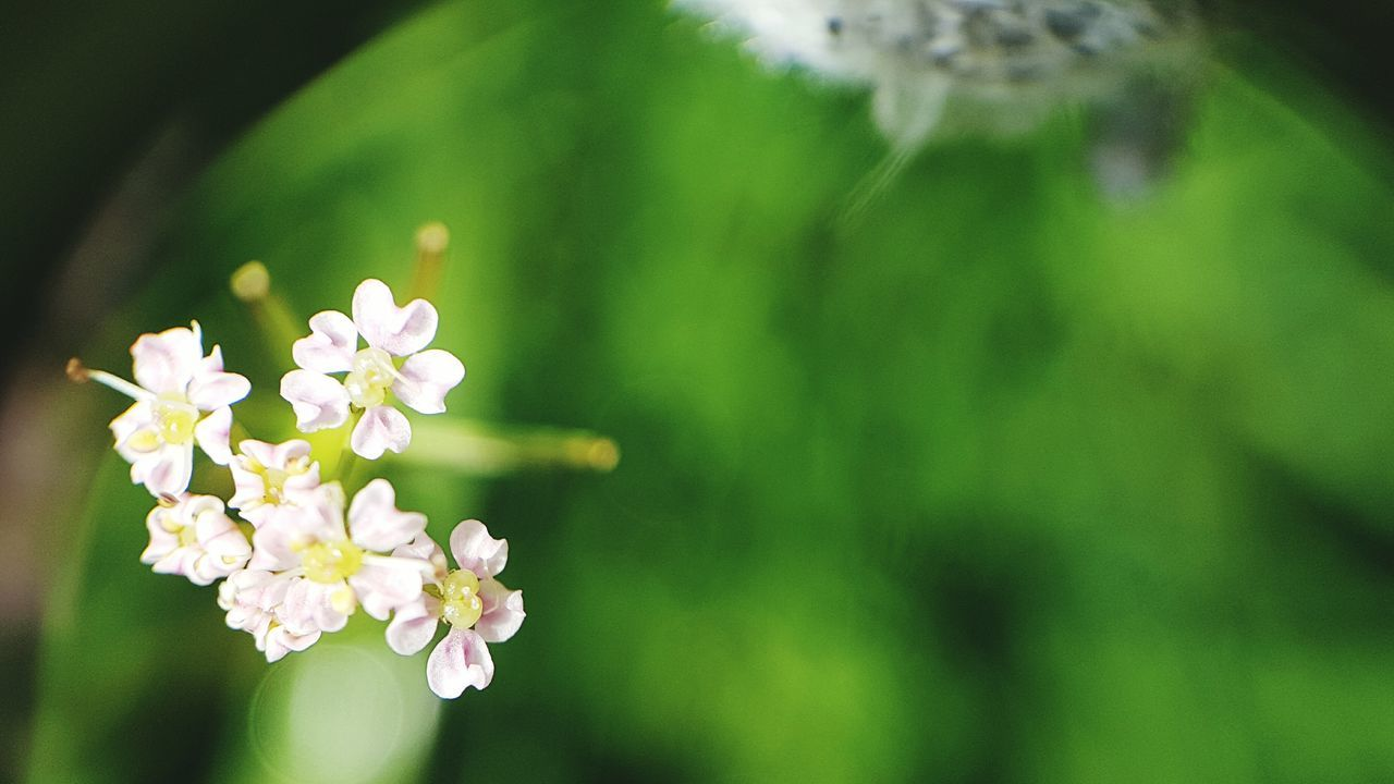 Eyem Nature Lovers  LoveNatureAndMountain Switzerland Beauty In Nature Macro Flower Photography