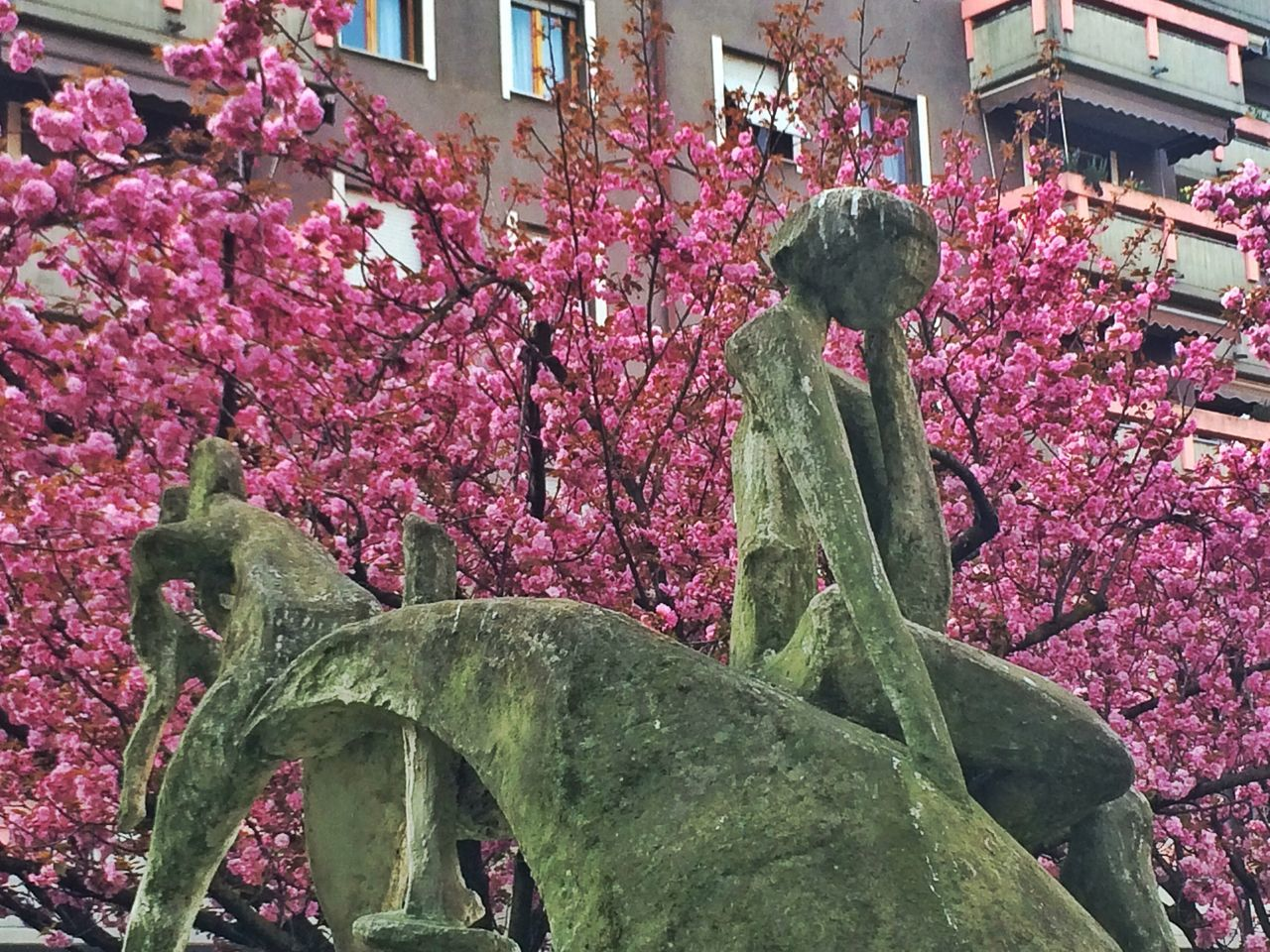 Nature_collection Urban Nature Spring Springtime Home Pink Flower Spring Flowers Building Pink Spring Has Arrived