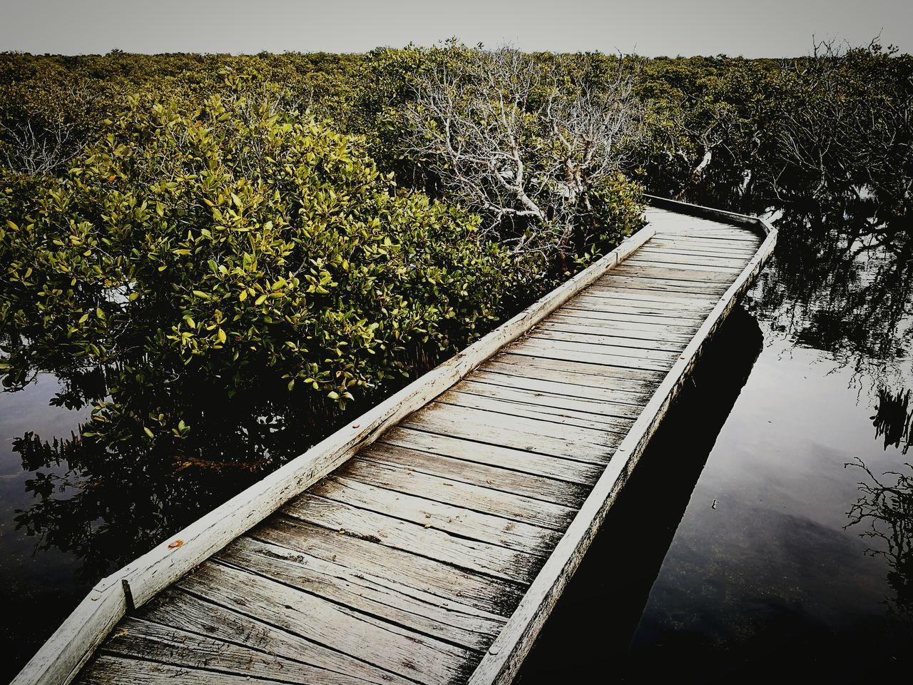 Mangrove trail in St. kilda Water Day No People Outdoors Nature Sky Close-up Mangroves