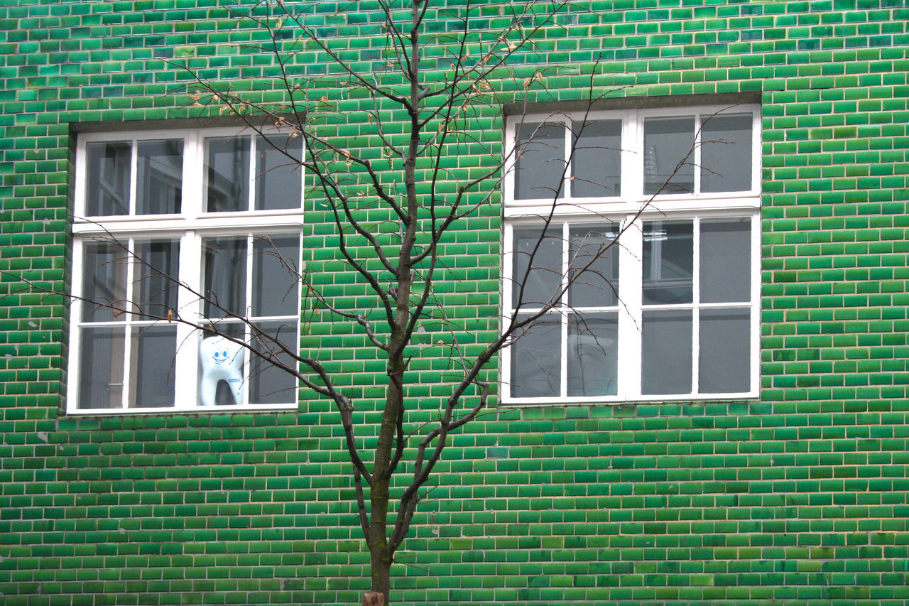 building exterior, architecture, window, green color, built structure, growth, outdoors, day, no people, ivy, nature, close-up