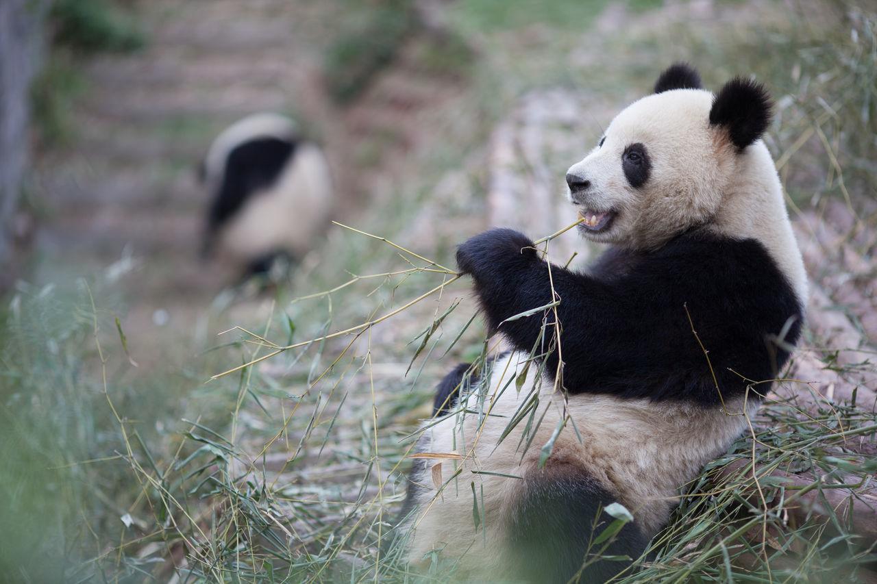 Beautiful stock photos of bear, Animal Behavior, Animal Hair, Animal Themes, Animals In The Wild