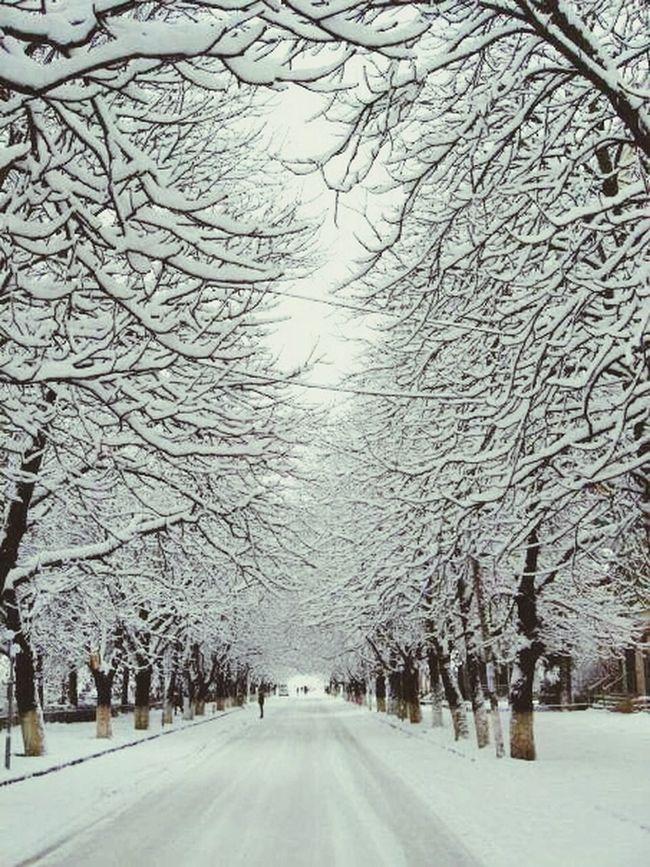 Snow ❄ Snowtown Winter Trees Boulevardofbrokendreams