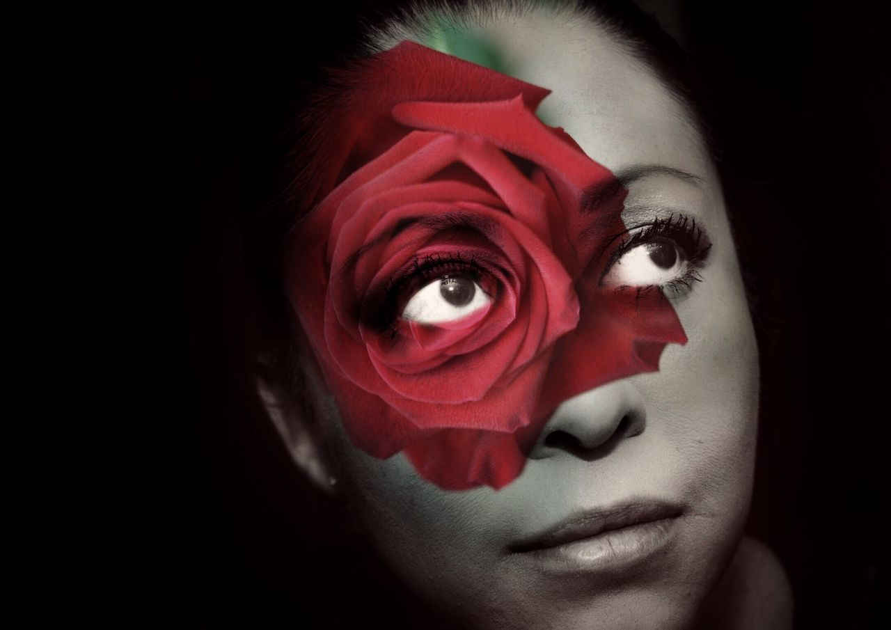 flower, rose - flower, red, portrait, close-up, looking at camera, one person, beautiful woman, young adult, headshot, studio shot, real people, young women, nature, black background, fragility, indoors, flower head, day, freshness, people
