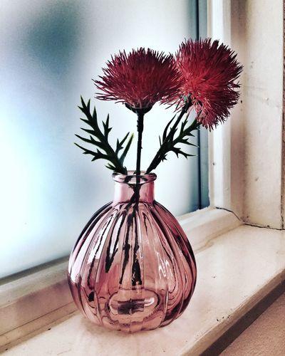 Blume Decoration Einrichten Fenster Fensterbank Flower Interior Living Living Bold Red Rot Vase Window Window Frame Wohnen EyeEmNewHere