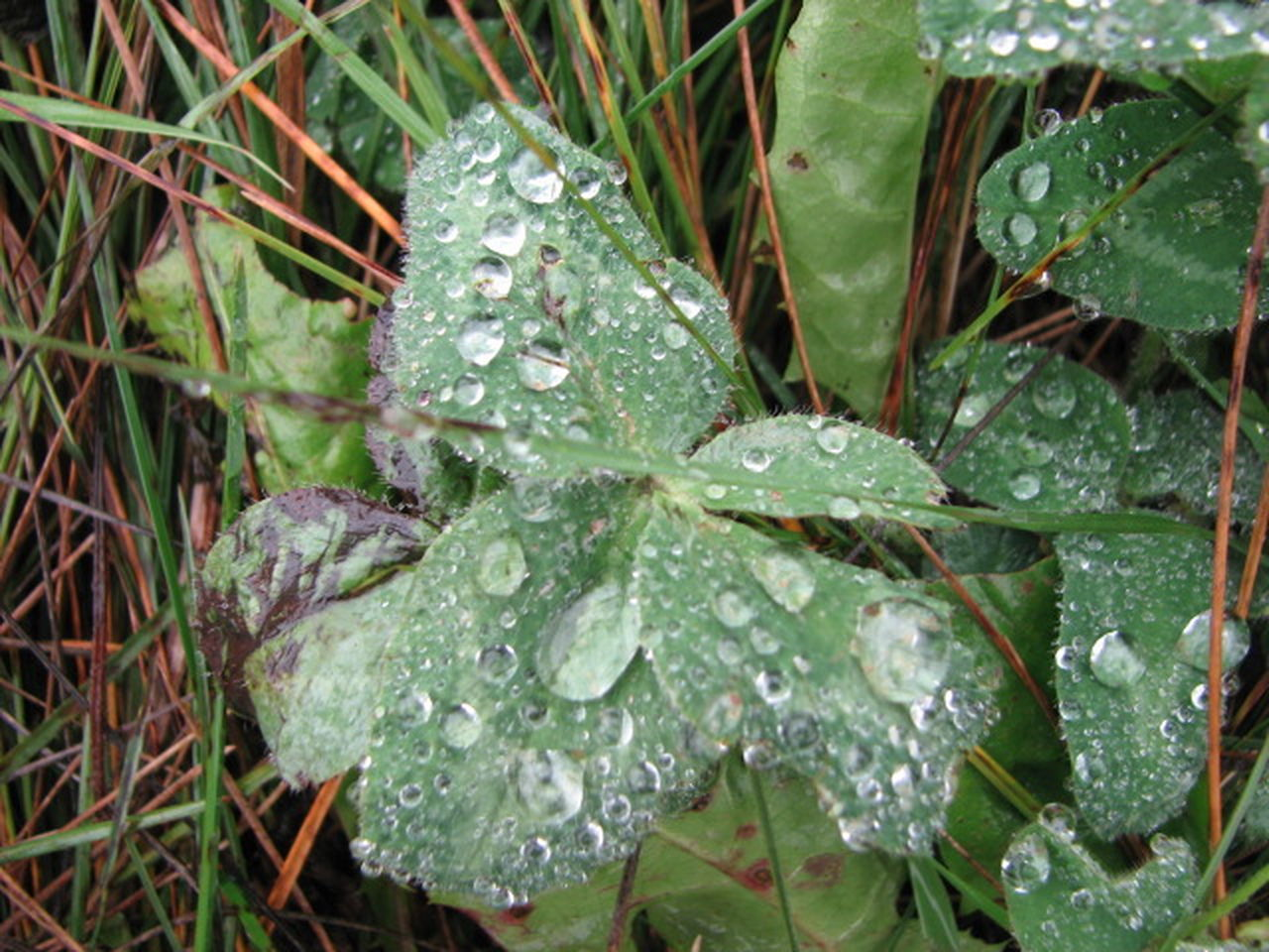 leaf, drop, nature, growth, water, wet, green color, beauty in nature, plant, freshness, no people, day, raindrop, close-up, outdoors, fragility