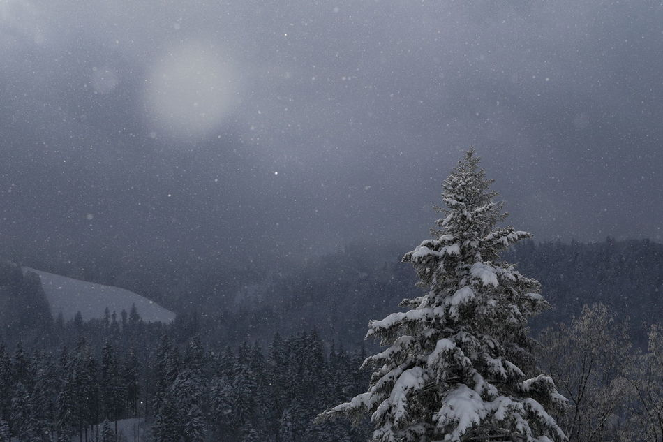 Incoming snowstorm. Bad Weather Blak And White Cold Temperature Coniferous Tree Dark Clouds Miles Away Zürcher Oberland Betterlandscapes EyeEm Nature Lover Fir Tree Forest Landscape Monochrome Nature No People Snow Snowfall Snowflakes Snowing Snowstorm Still Life Switzerland Tree Winter Winterscapes