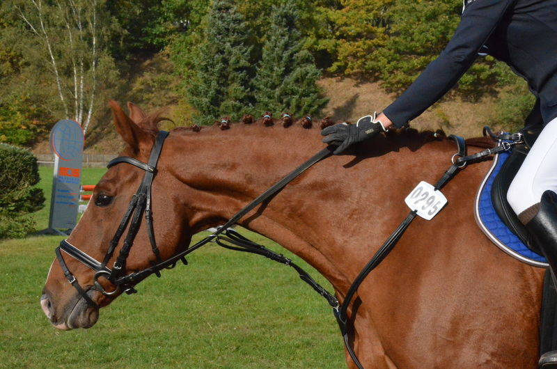 Be Happy Proud Horse Champion