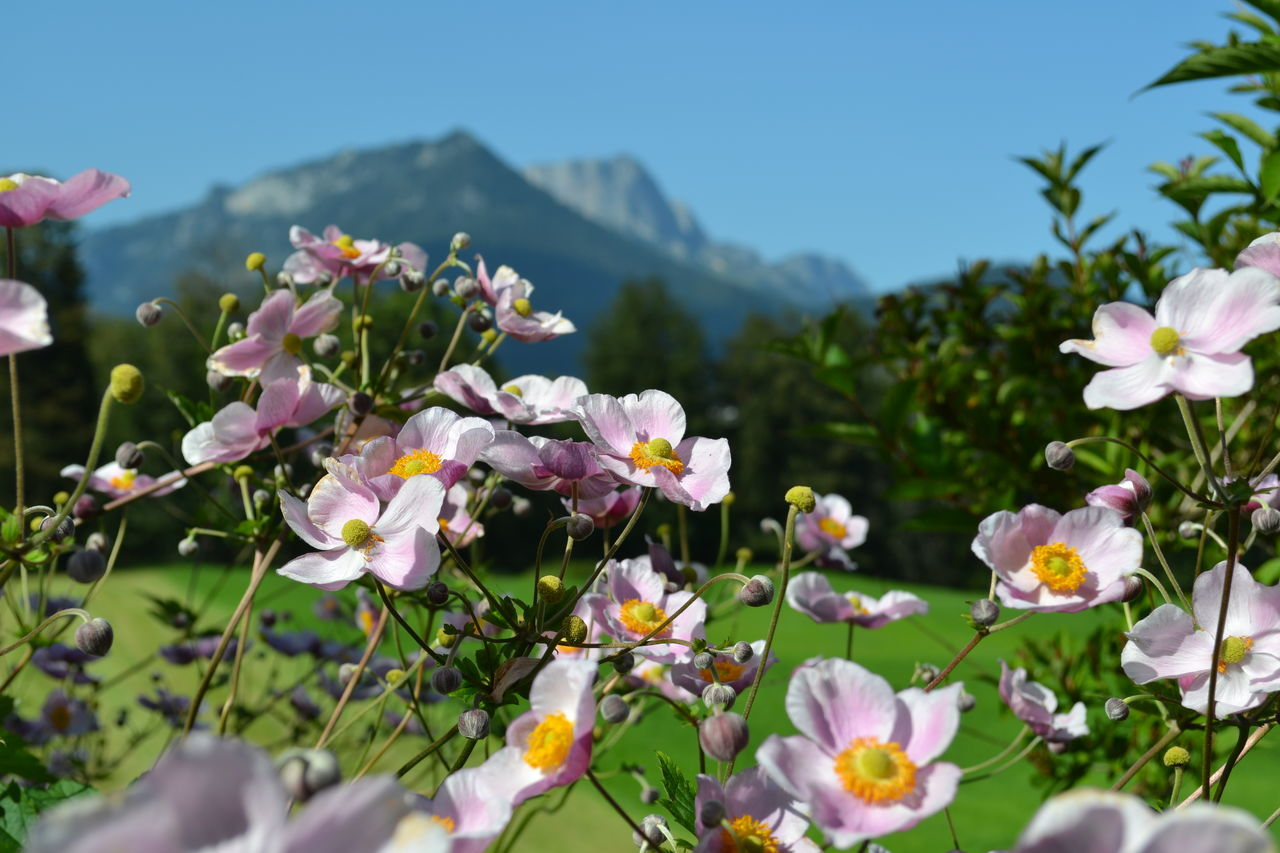 Berchtesgaden Berchtesgaden Alps Berchtesgadenerland Landscape Landscape_photography Mountain Schönau Am Königsee Untersberg The Week On EyeEm
