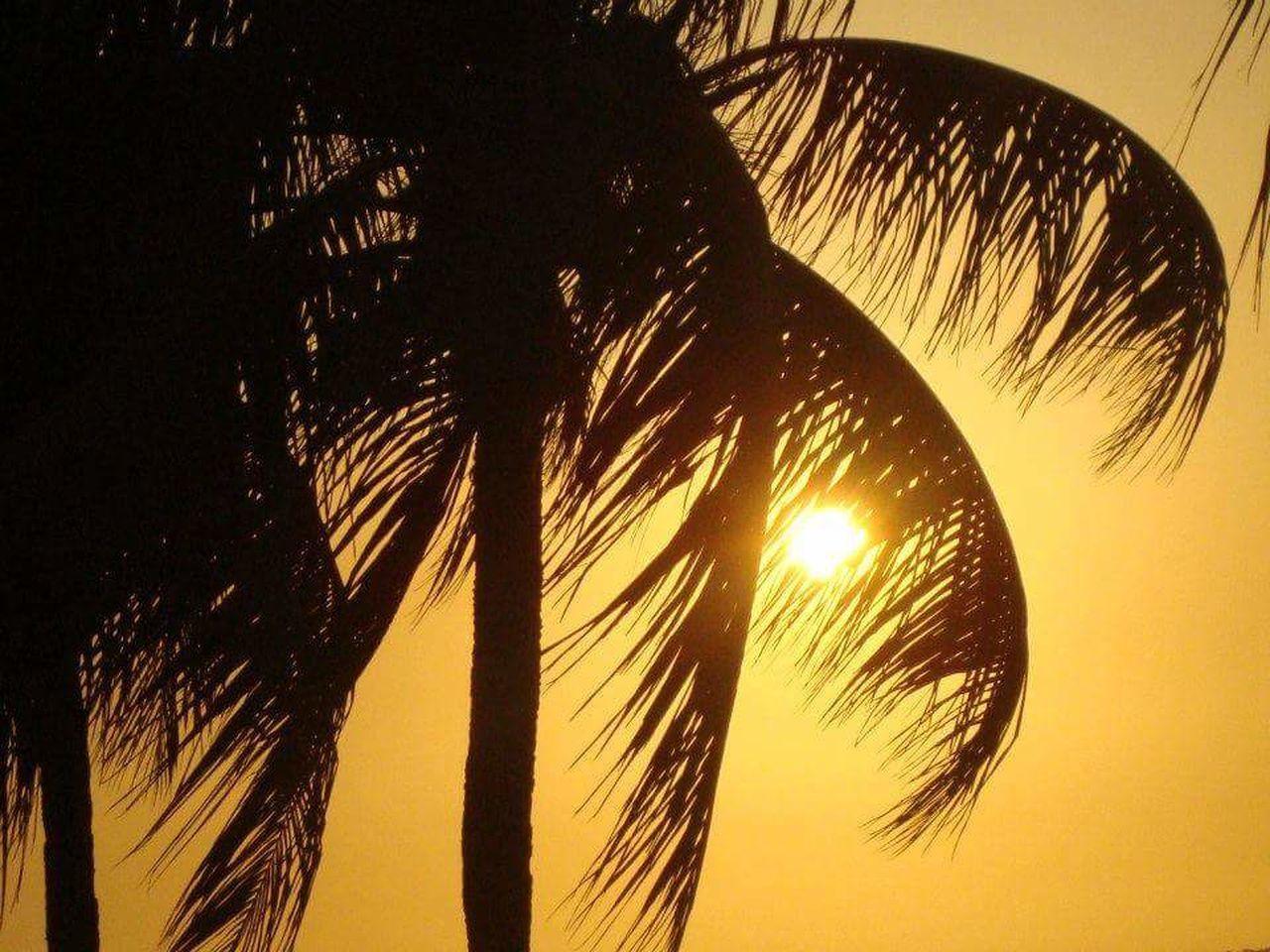 Silhouette Sky No People Nature Sun Heat - Temperature Close-up Beachtime Palms Beach Venezuela