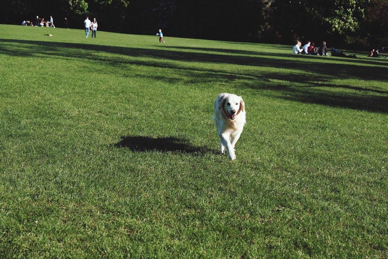 BYOPaper! Dog Running Dog Green Field Park