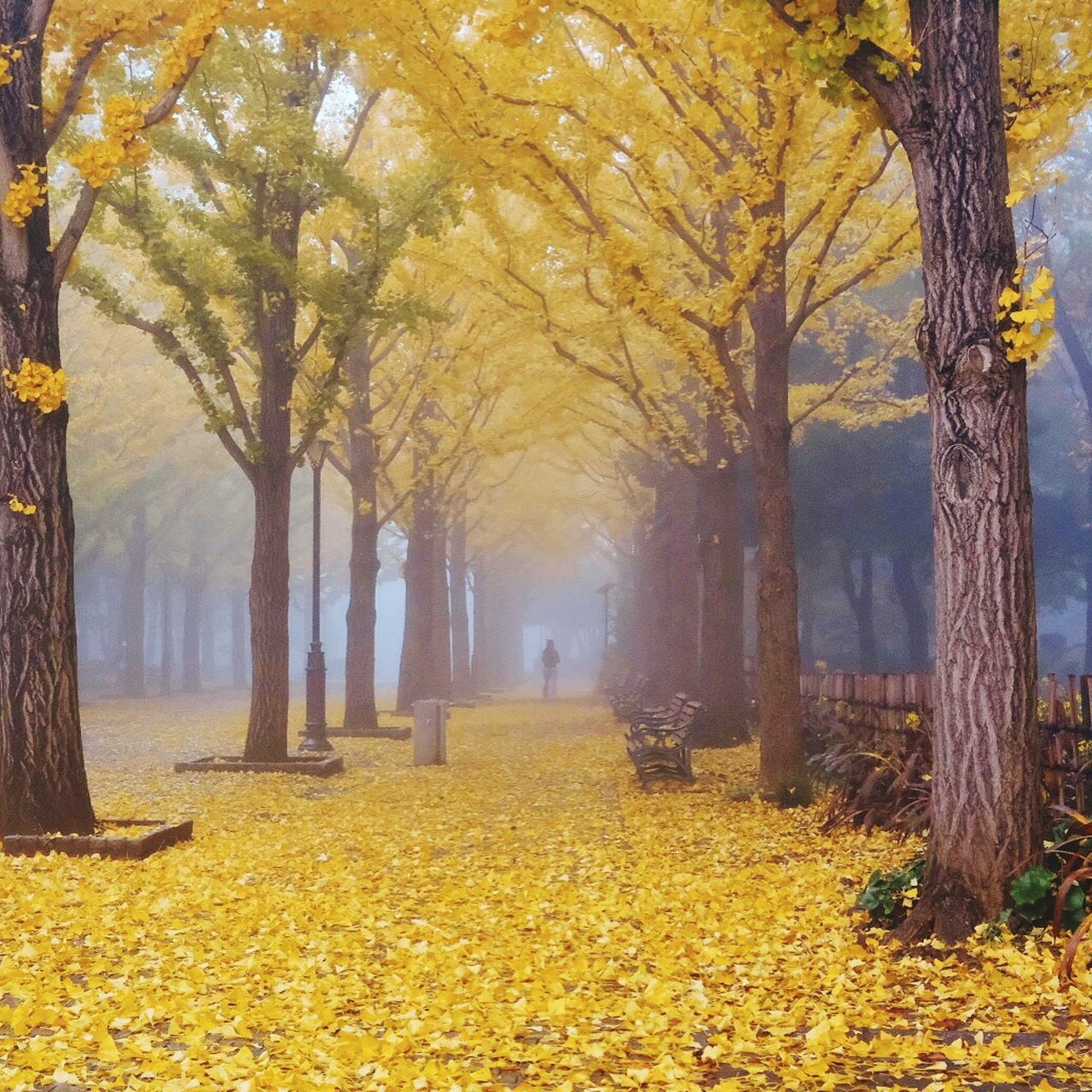 Tree Autumn Nature Forest Beauty In Nature Japan EyeEm Gallery EyeEm Best Edits EyeEm Best Shots Fujifilm Eyemphotography Beautiful Nature X-PRO2 Wabi-sabi Japan Photography Fujifilm_xseries Beauty In Nature Street Photography Yellow