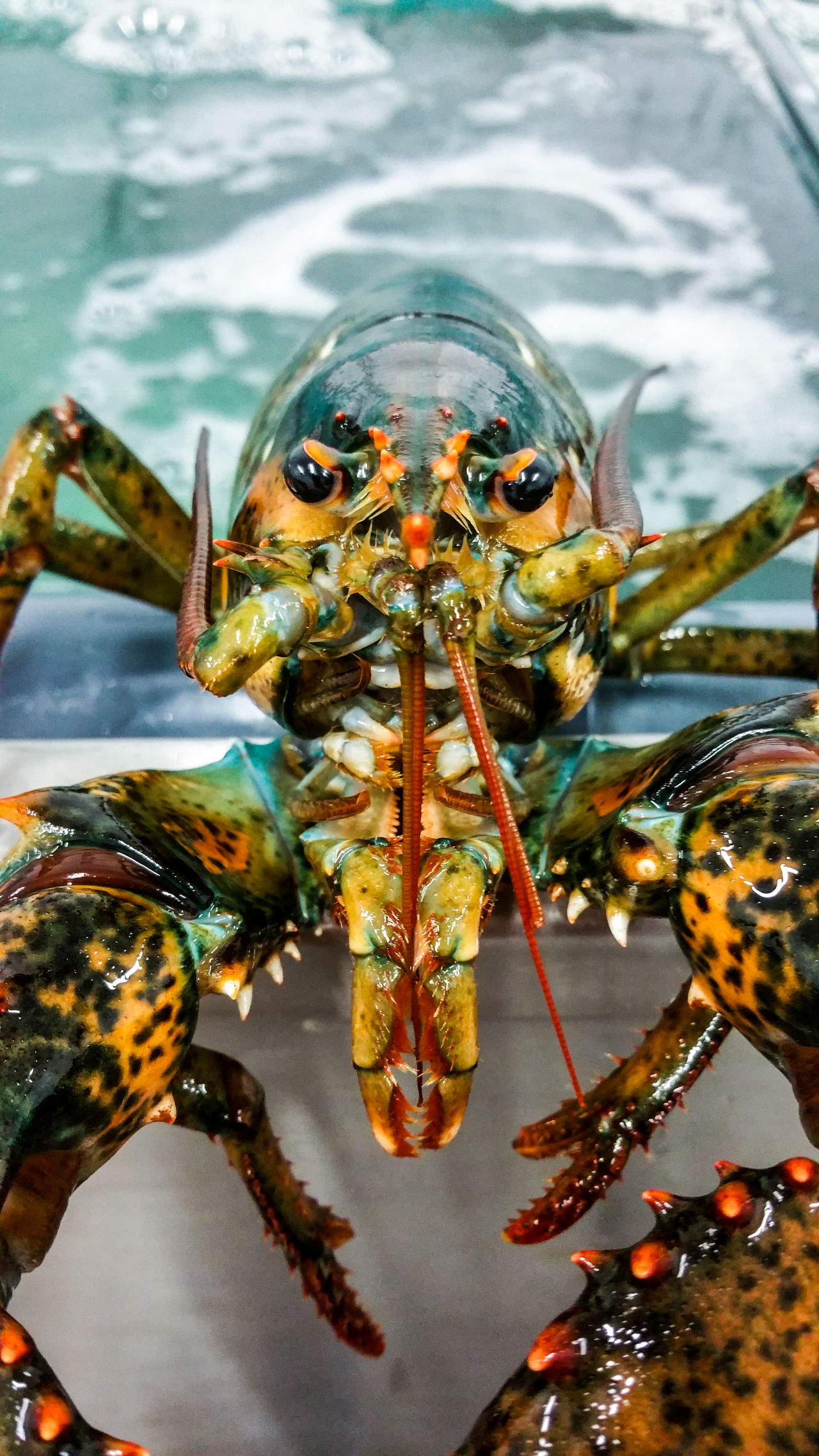 One Animal Animal Themes Reflection Water Animals In The Wild Close-up Nature No People Animal Wildlife Sea Life Beauty In Nature Aquarium Lobsters Sea Life. Sea Portrait Wild Sea monster Monster The Week On EyeEem Animals