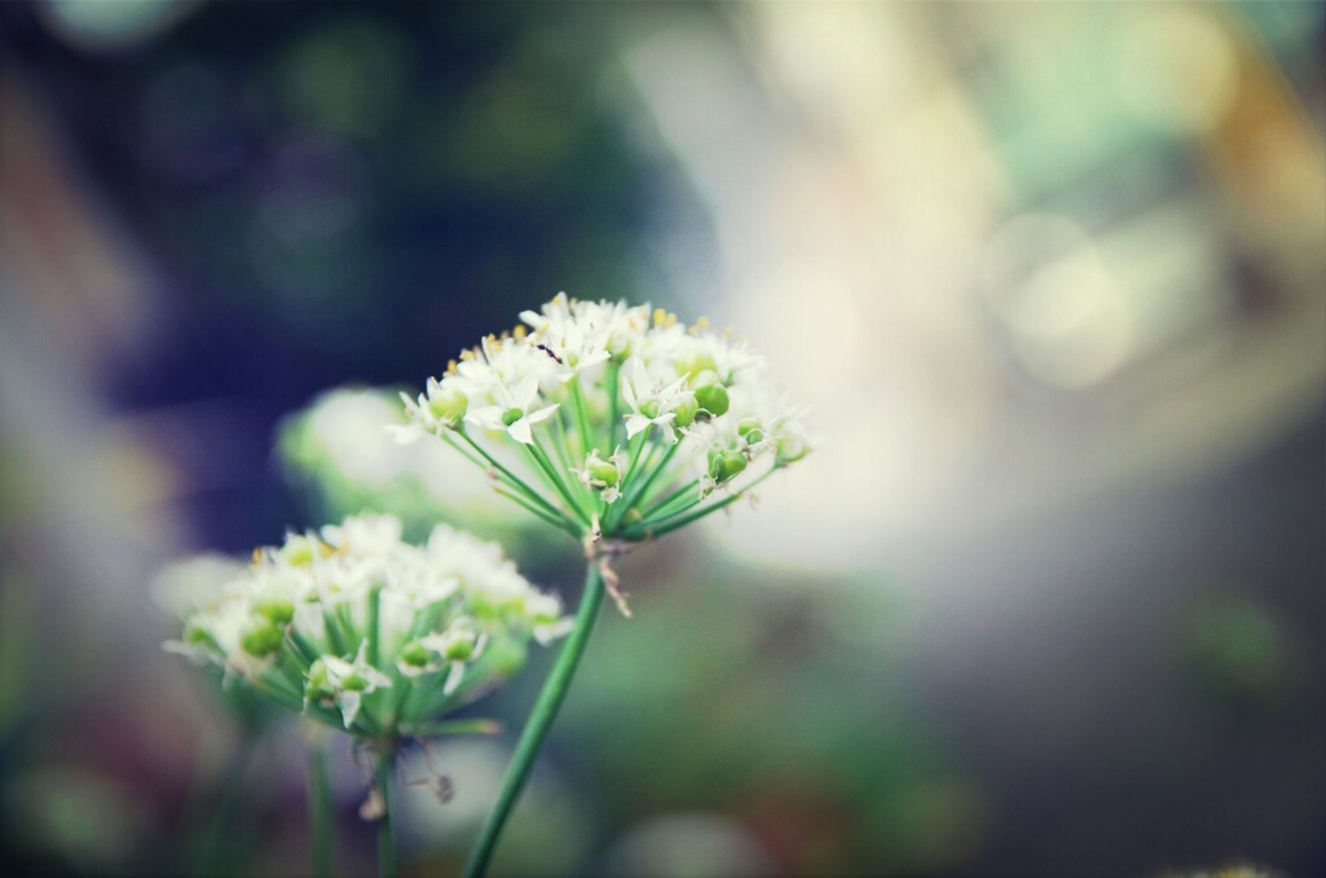 flower, growth, freshness, focus on foreground, fragility, close-up, plant, nature, beauty in nature, bud, white color, stem, petal, selective focus, leaf, flower head, new life, blooming, green color, beginnings