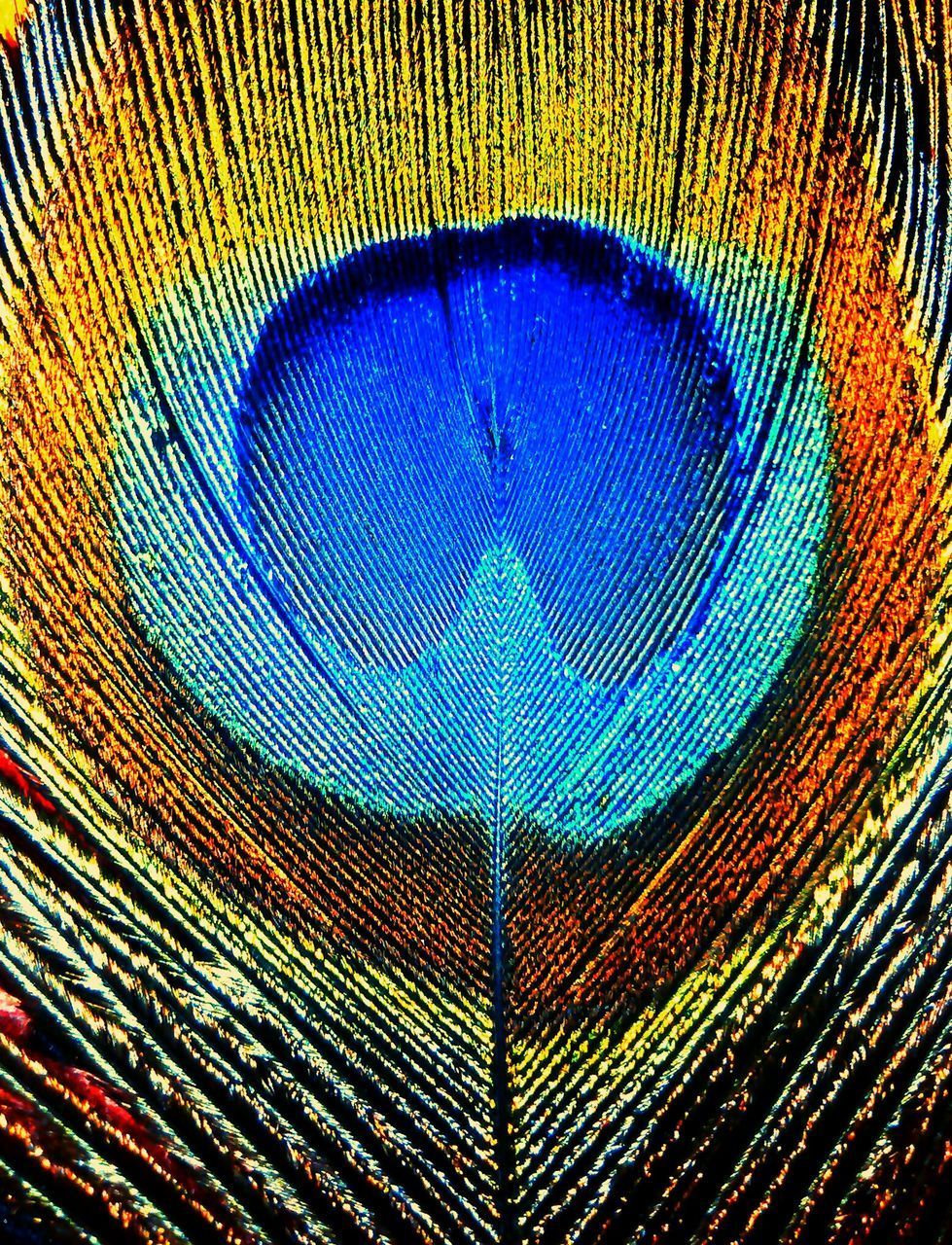 peacock, multi colored, blue, peacock feather, backgrounds, close-up, no people, full frame, social issues, feather, textured, fragility, bird, day, beauty in nature, nature, outdoors