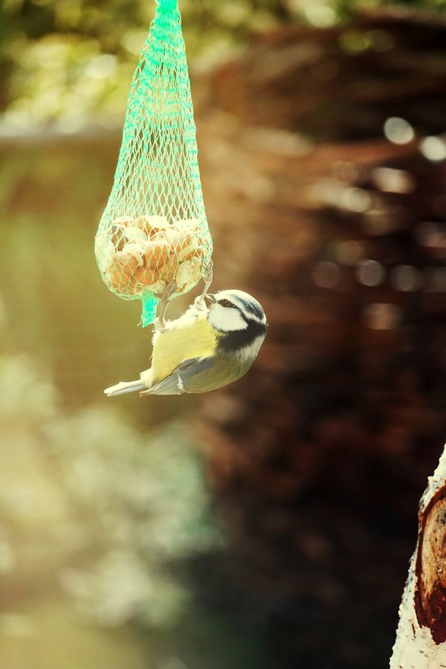 Bird Bird Eating Focus On Foreground Close-up Selective Focus Outdoors Day Zoology Fragility Freshness