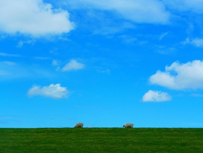 Two Is Better Than One Hanging Out Green Grassland Sylt 2016 Green Nature DYKES Dyke  Sheep On Dike Dike Green Green Green!  Grass And Sky Check This Out Abandoned Places