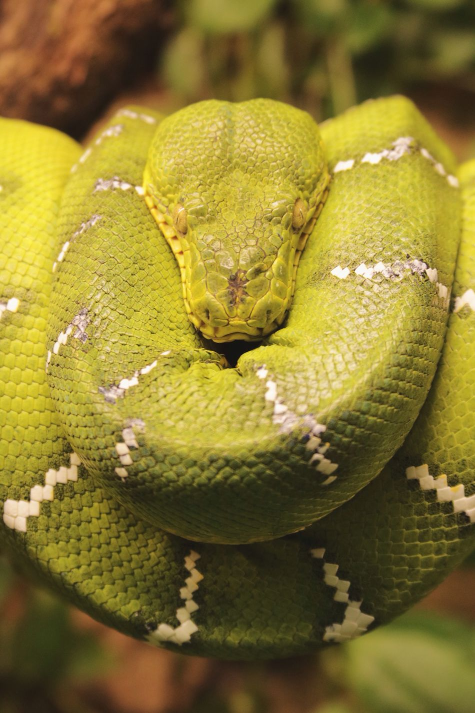 Boa One Animal Reptile Animal Themes Animal Wildlife Green Color Close-up Animals In The Wild Nature Animal Body Part Animal Skin Cold Danger Poison Dangerous