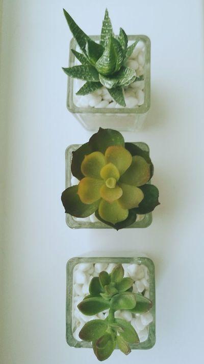 Miniature Mini Plants Stones Glass Green Plants Collection Plants Pretty Pure Nature_collection