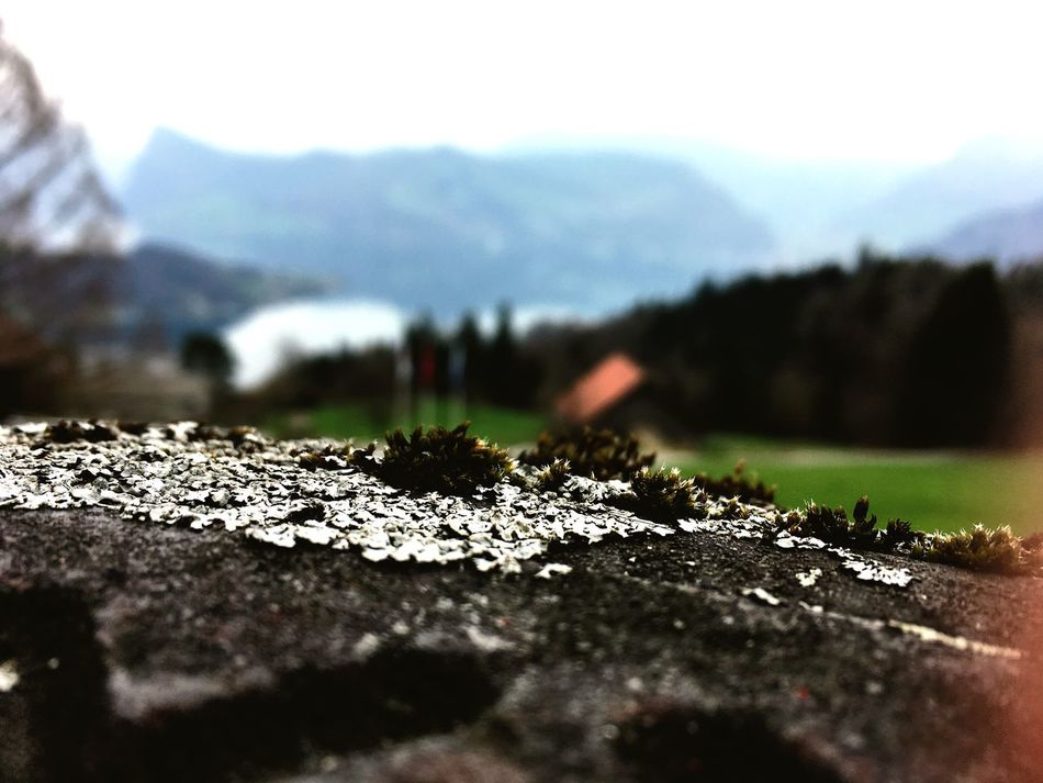 Big Little View Moss Mosscovered Landscape Mountain Nature Outdoors No People Beauty In Nature