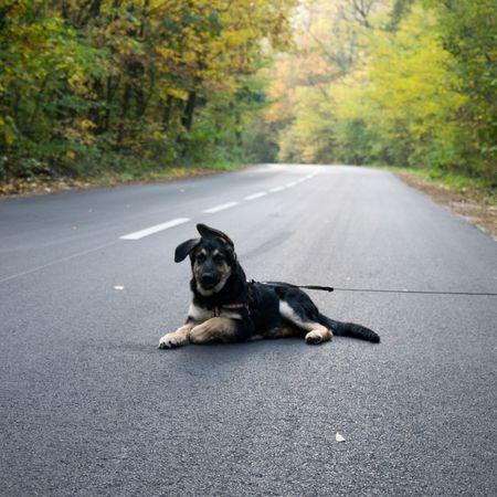 #puppy Dog Pets Asphalt One Animal Domestic Animals Outdoors Road Day Street Animal Animal Themes